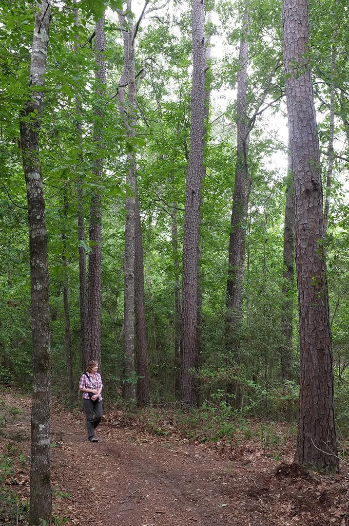 Lake Houston Wilderness Park Deartexas