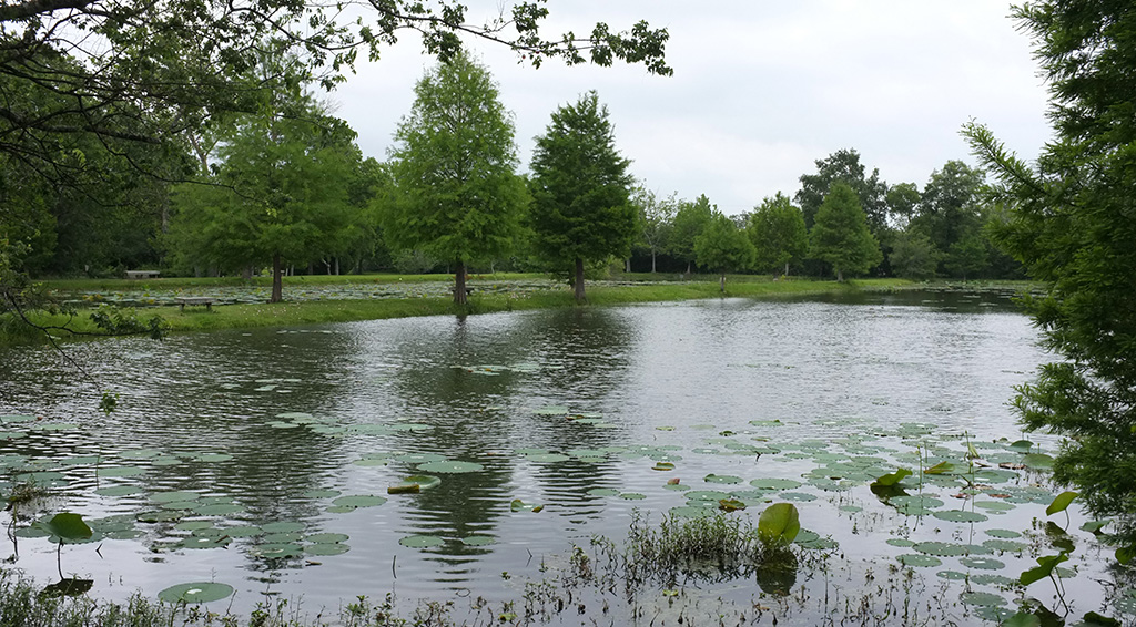 Sheldon lake state park deartexas for Sheldon lake fishing