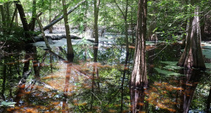 Prothonotary Pond