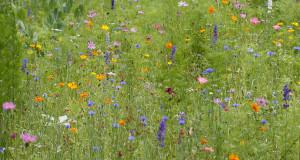 Mercer Arboretum & Botanical Gardens