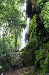 The grotto of moss and ferns at Gorman Falls