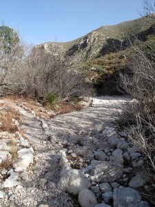 Path across a dry stretch of the stream at McKittrick Canyon
