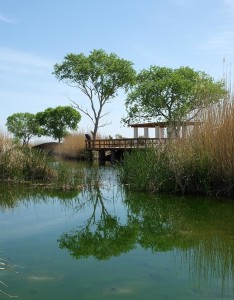 Restored desert wetlands at Balmorhea
